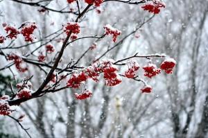 Winterillusion